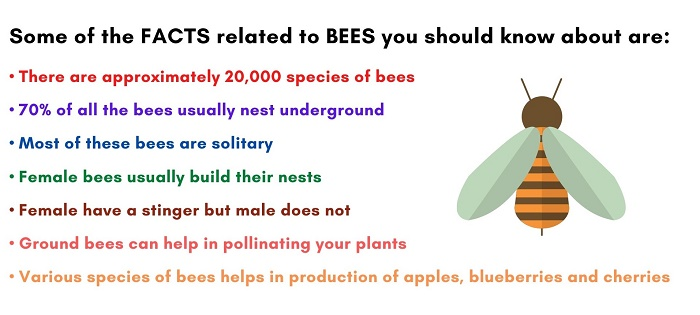 ground bees facts