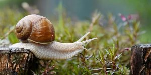 Stop Snails and Slugs from Entering House