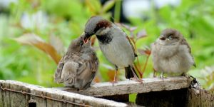 Stop Sparrows from Building Nest
