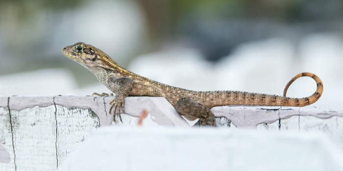 can lizards be killed by cockroach spray