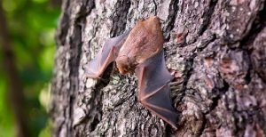 get rid of bats in your house