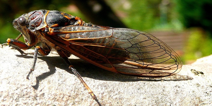 How to get rid of a cicada in your house