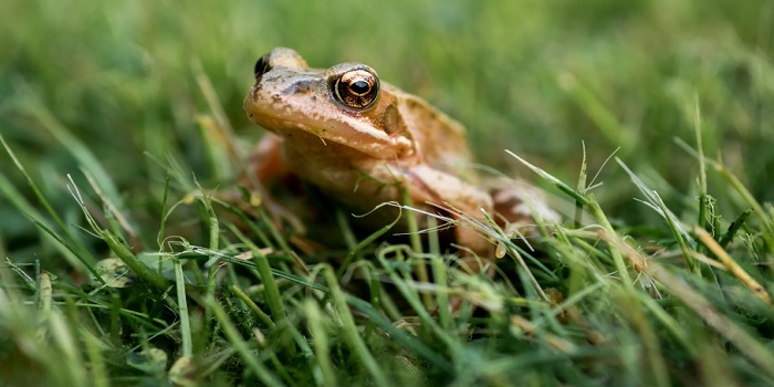 how to get rid of coqui frogs