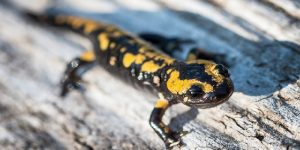 how-to-trap-salamanders-in-the-house