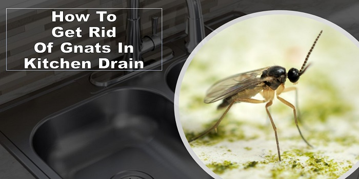 how to get rid of gnats in kitchen drain
