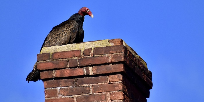 how to discourage turkey vultures from roosting