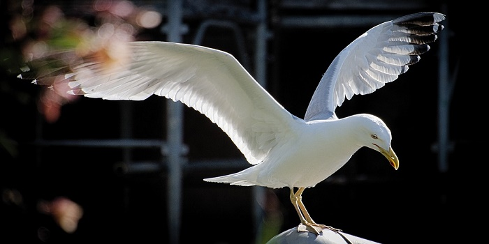 Stop Seagulls from Nesting on Chimney