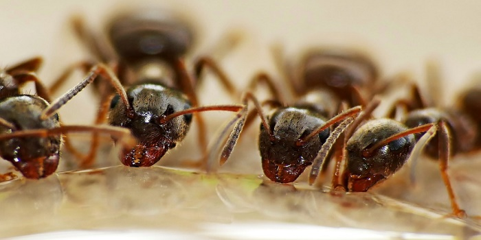 how to get rid of fire ants in the house