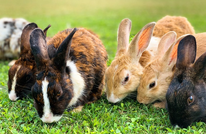 how to get rid of rabbits in garden