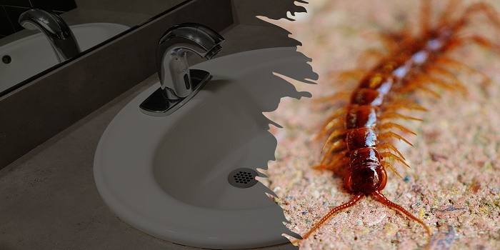 how to keep centipedes out of drains