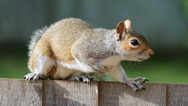 What to Do if Squirrel Bites