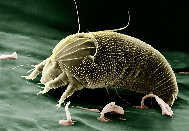 how to get rid of computer mites